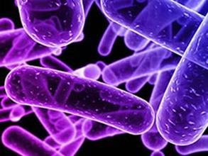 Febrile Antigens Rapid Test