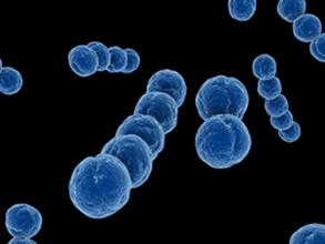 Strep B Antigen Rapid Test